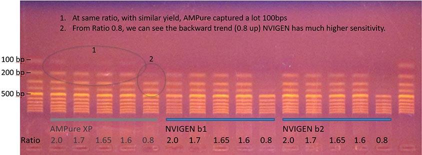 200bp-size-selection-ampure-xp-alternative