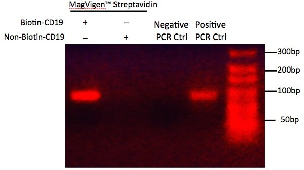 DNA captured with MagVigen Streptavidin beads and biotin-CD19-targeted DNA probes