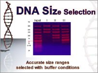 DNA Size Selection and DNA Clean-up for NGS DNA Library Purification