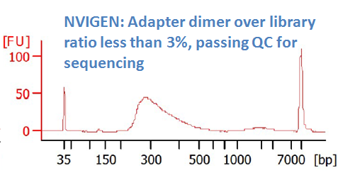 after DNA sizing purification with MagVigen (dimer ratio <3%)