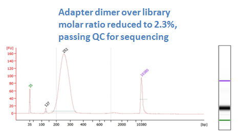 after DNA sizing purification with MagVigen (dimer ratio 2.3%)