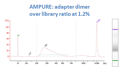 after DNA sizing purification with AmPure XP (dimer ratio 1.2%)