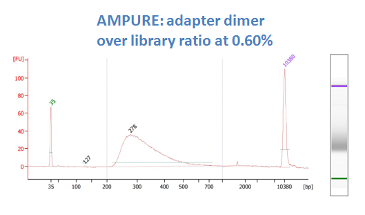 after DNA sizing purification with AmPure XP (dimer ratio 0.6%)