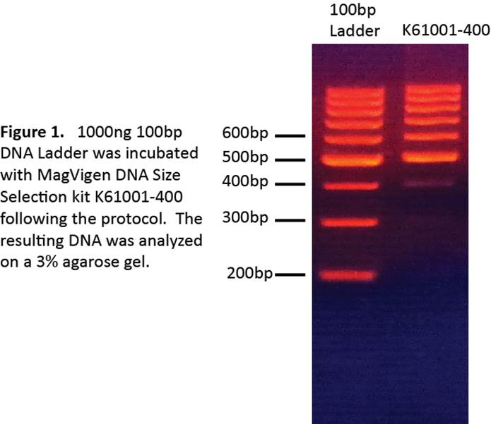 k61001-400bp-magvigen-dna-size-selection