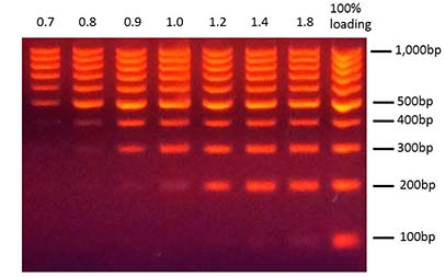 magvigen-dna-precise-size-selection-by-adjusting-volume-ratio