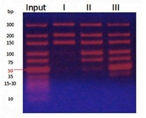 MagVigen DNA cleanup & sizing