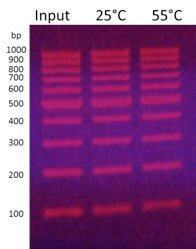 non_hybridization based DNA capture wide range temperature conditions