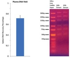 Ultra Low DNA Ladder DNA recovery with MagVigen Plasma DNA Extraction Kit