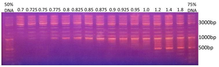 k61001-1000bp-magvigen-dna-size-selection