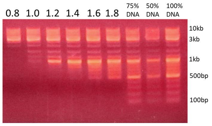 k61001-extend-500-3000bp-magvigen-dna-size-selection